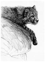 Cheetah by FinAngel