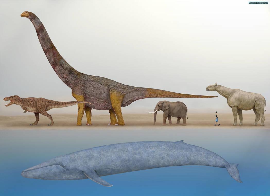 Blue Whale Size Comparison by SameerPrehistorica on DeviantArt