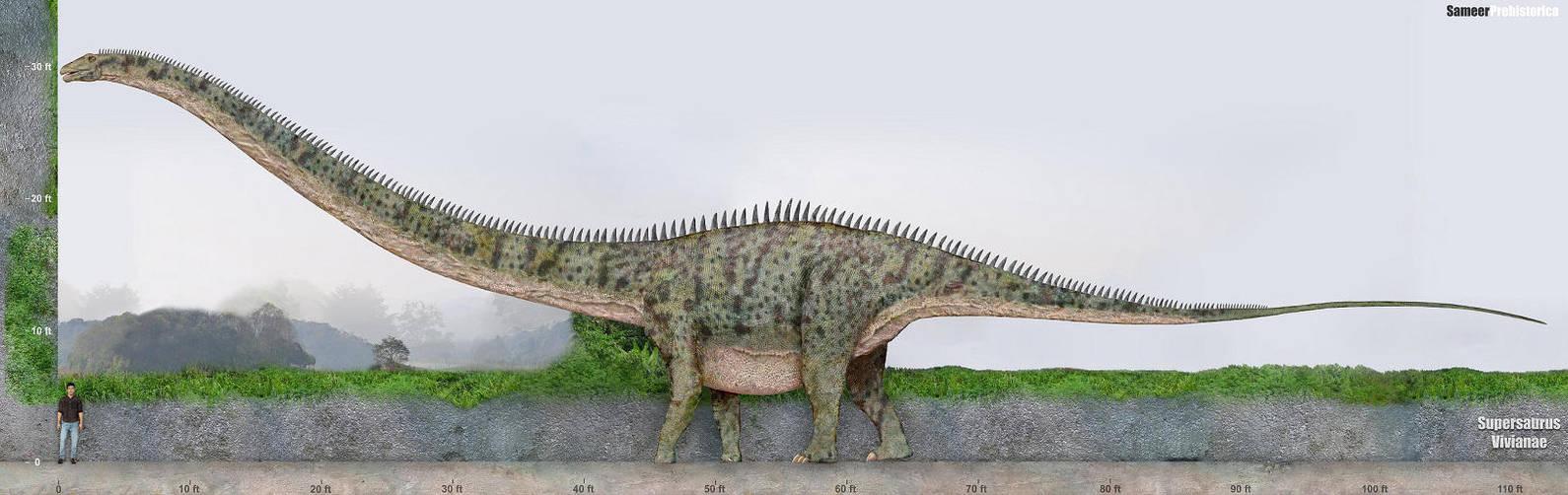 Supersaurus by SameerPrehistorica