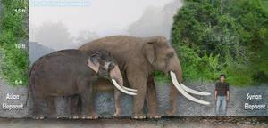 Syrian Elephant by SameerPrehistorica