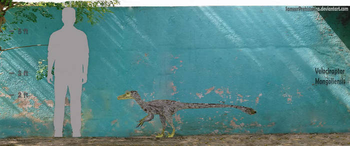 Velociraptor by SameerPrehistorica