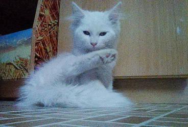 Domestic cat by SameerPrehistorica