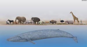 Animals Size Comparison by SameerPrehistorica