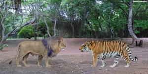 African Lion vs Siberian Tiger by SameerPrehistorica