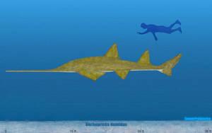 Onchopristis Size by SameerPrehistorica
