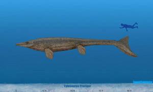 Tylosaurus Size by SameerPrehistorica