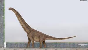 Futalognkosaurus size by SameerPrehistorica
