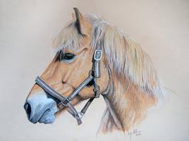 Finnhorse by Eija-H