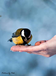 Bird on a hand by PictureByPali