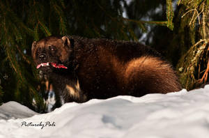 The Wolverine by PictureByPali