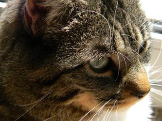 My Cat by Elaira