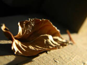 Leaf by Elaira
