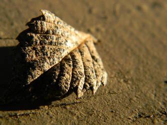 Leaf 5 by Elaira
