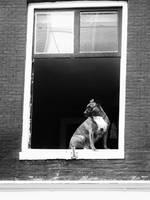 Dog by PinsAndMe