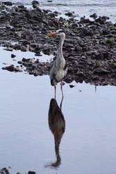Stork by Cilmeron