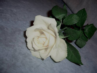 white rose stock 4 by cathy-halo