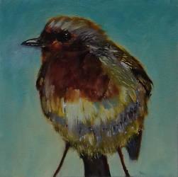 European Robin by douglascampos