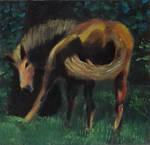 Horse by douglascampos