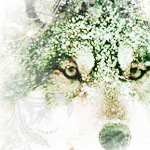 Wolf // Susi by RizuRizuRizuki