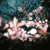 Cherry Pink by PurestGreen