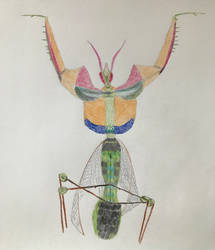 My friend Idolomantis diabolicus by ariya-sacca