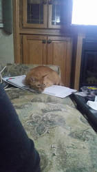 my cat is on my binder. by jaxtheheathen