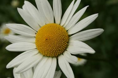 Flower 1 by Mavi222