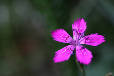 Cute flower :3 by Mavi222
