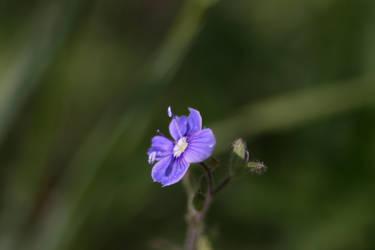 Cute blue flower :3 by Mavi222