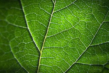 Leaf by Mavi222
