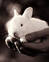 Rabbit 02 by slumberdoll