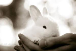 Rabbit 05 by slumberdoll
