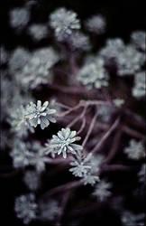 Lightness by slumberdoll