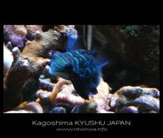 Little blue fish by Lou-NihonWa