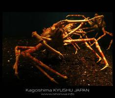 Japanese sea alien -1- by Lou-NihonWa