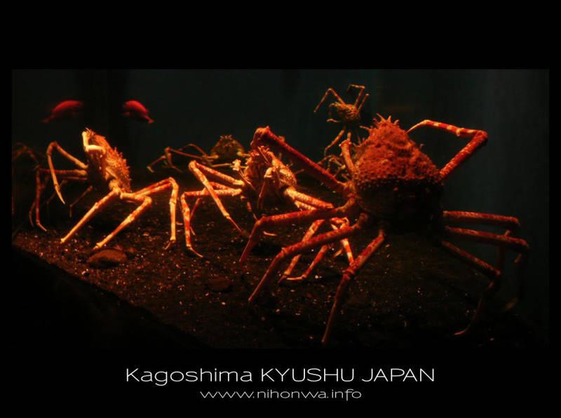 Japanese sea alien -2- by Lou-NihonWa
