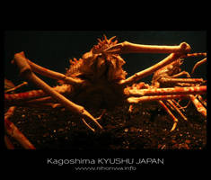 Japanese sea alien -3- by Lou-NihonWa