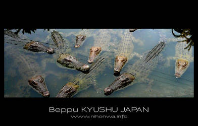 Crocodiles of Beppu hell by Lou-NihonWa