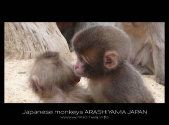 Japanese monkeys -1- by Lou-NihonWa