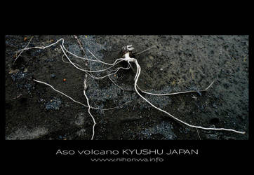 Surviving roots on Aso volcano by Lou-NihonWa