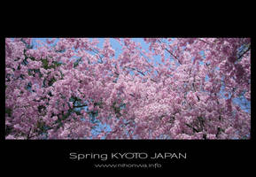 Sakura -1- by Lou-NihonWa