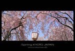 Sakura -4- by Lou-NihonWa