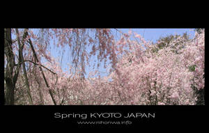 Sakura -5- by Lou-NihonWa