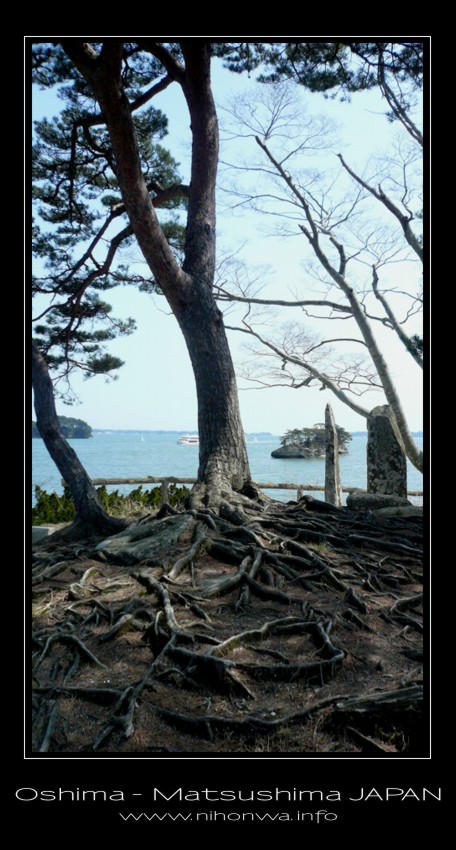 Tree roots on Oshima island by Lou-NihonWa