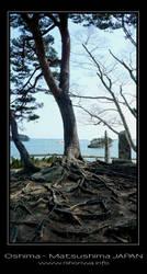 Tree roots on Oshima island by Lou-NihonWa
