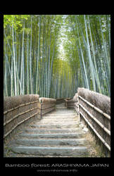 Bamboo forest 2 by Lou-NihonWa