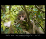 japanese monkey by Lou-NihonWa