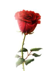 Red Rose by AaronRutten
