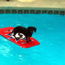 My dog on a boogie board or whatever it's called. by LordVaporwave