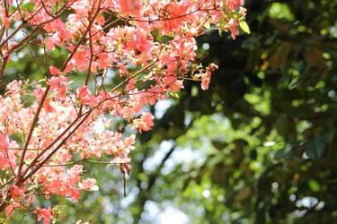 Secret Garden by Swifty52